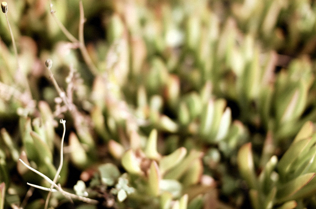 3 - blured, grain, grey, macro, monochrome, planta, sepia,